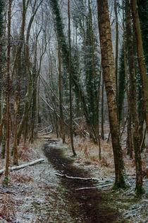 Winter Birch von David Tinsley