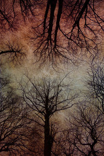 Tree Canopy by David Pringle