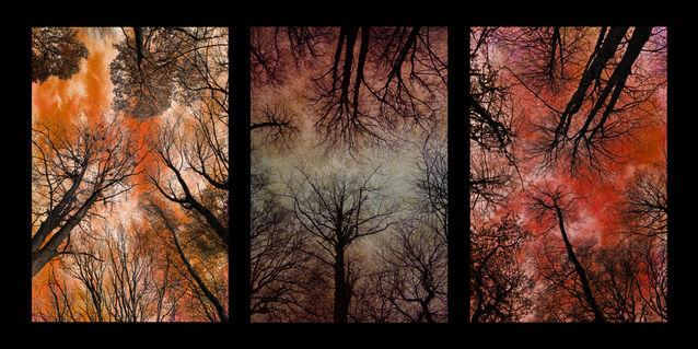 Tree-canopy-triptych-2