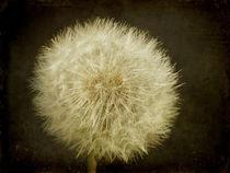 Textured Dandelion von Sarah Couzens