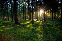 Forest freshness by Olha Rohulya