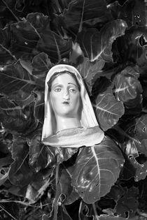 Lettuce Pray by Laura Martinazzo