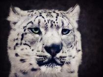Schneeleopard by AD DESIGN Photo + PhotoArt