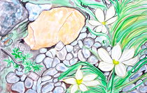 Snowdrops and Rocks von Christine Chase Cooper