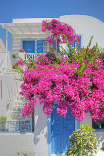 House Of Bougainvillea von David Birchall