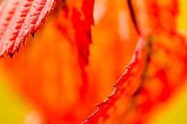 Blätter im Herbst by jstauch