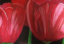 Rote Tulpenblüte von Klaus Engels