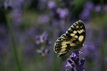 Ein weiterer kleiner Helfer, butterfly by Christian Busch