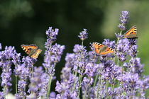 Fleißige Helferlein, butterfly by Christian Busch