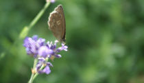 kleiner Helfer, butterfly by Christian Busch