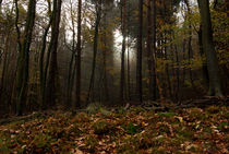 Palatinate Forest in autumn von Iryna Mathes