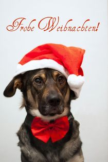 Weihnachten Hund I von elbvue von elbvue