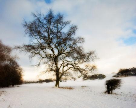 Winter-oak-10by8
