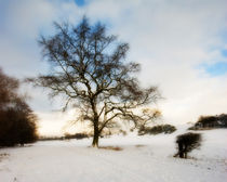 Winter Oak by Oliver Wood