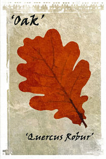Oak Leaf von David Pringle