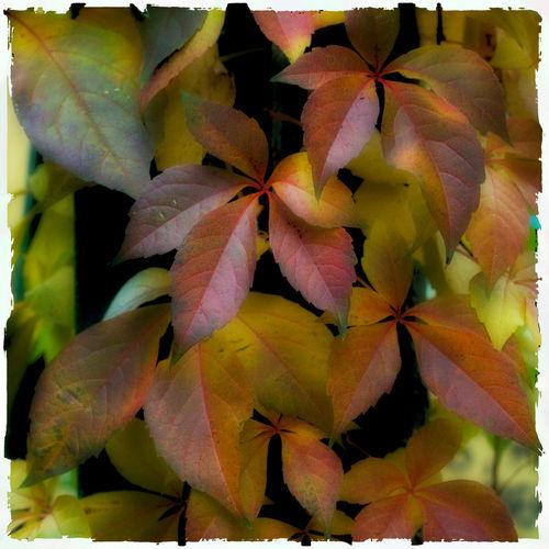 Autumn-02