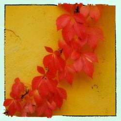 Autumn-03
