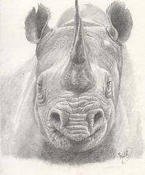 Rhino von Michel Kress
