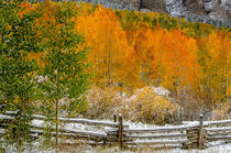 Rocky Mountain Autumn von Barbara Magnuson & Larry Kimball