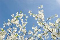 Spring flowers by Tobiasz Stefaniak