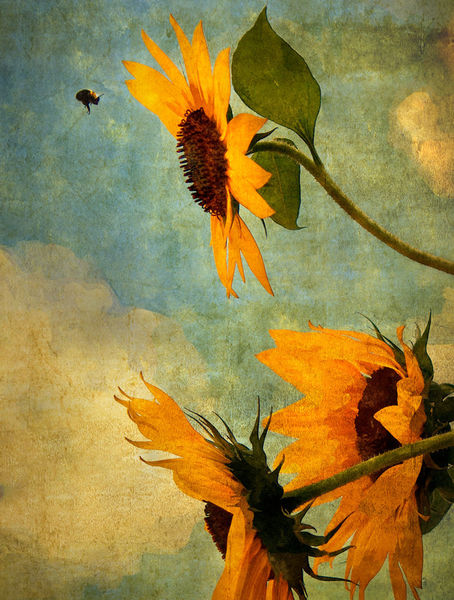 Bee-and-sunflower