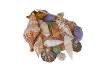 Sea Shells by Judy Hall-Folde