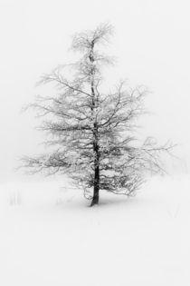 Snow-tree-and-fog