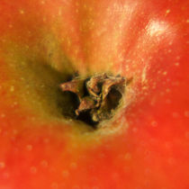 Apfeltrichter, red apple von Sabine Radtke