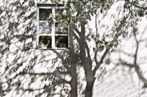 Tree at my Window by JACINTO TEE