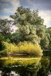 Bauminsel 8 von Erhard Hess