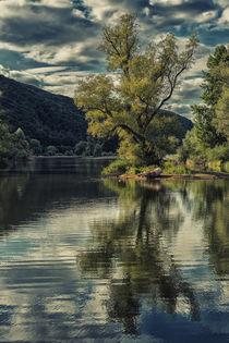traumhafte Bauminsel - dunkel von Erhard Hess