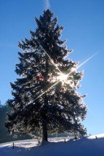 Wintertag von gfc-collection