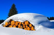 Holzstämme unter einer dicken Schneedecke von gfc-collection