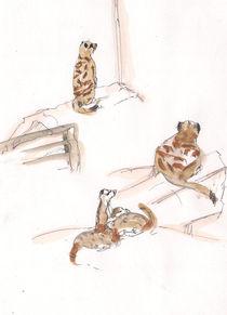 suricate/ Erdmännchen von Cornelia Papendick