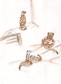 suricate/ Erdmännchen by Cornelia Papendick