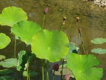 Wasserpflanzen von Susanne Winkels
