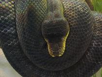 Schlangenschlaufe by Susanne Winkels