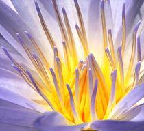 Blütenzauber by Bruno Schmidiger