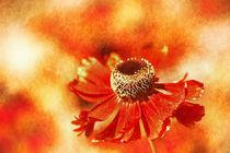 Blumenfeld  von Barbara  Keichel