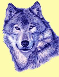 Wolf PopArt Blue von Nicole Zeug