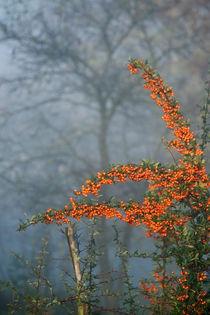 Novembermorgen by Heidrun Lutz