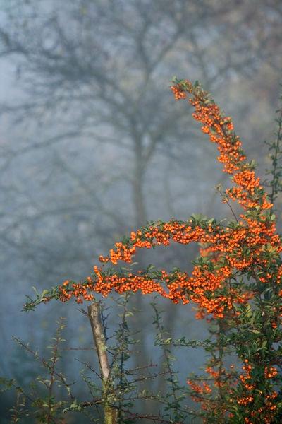 Novembermorgen-orange