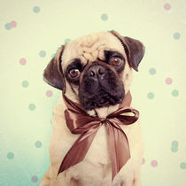 Pug with Bow by Roman Bratschi