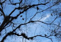 Blue Sky von Rosalie Scanlon