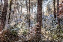 Raining Snow von Marc Garrido Clotet