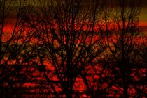 red von joespics