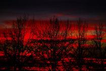 red XVII von joespics