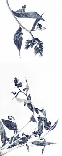 Northern Bluebells (Hochformat) von Priska  Wettstein