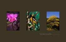 Symbols of Venezuela by Juan Carlos Lopez