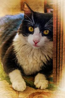 Sitting cat von Juan Carlos Lopez